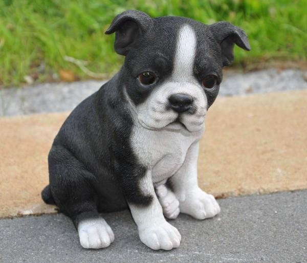 Gartenfigur Deko Figur Hund Boston Terrier - 22 x 17 x 27 cm